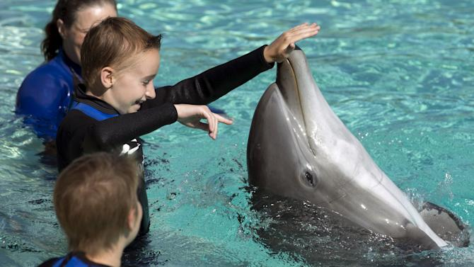 A young patient from Rady Children's Hospital directs a bottlenose dolphin to spin around after being invited to swim and interact with dolphins at Sea World in San Diego