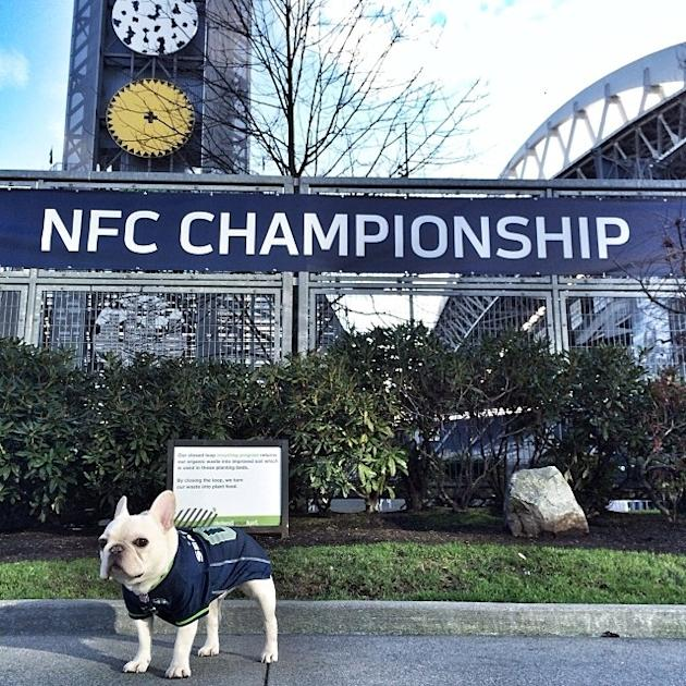 French Bulldog 'Sir Charles Barkley' Reigns Over Instagram