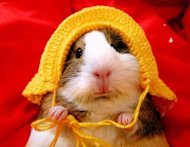 Guidelines for White Papers and Case Studies image guinea pig hat 1