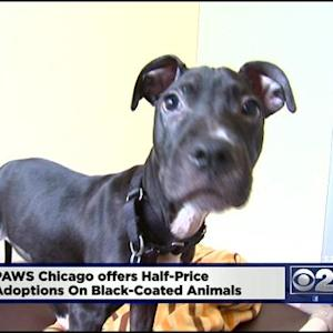 Shelter Offers Discount On Black-Coated Pets