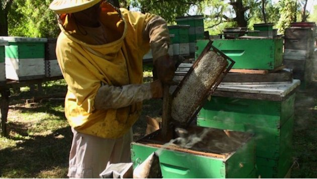 Argentinian honey production in danger