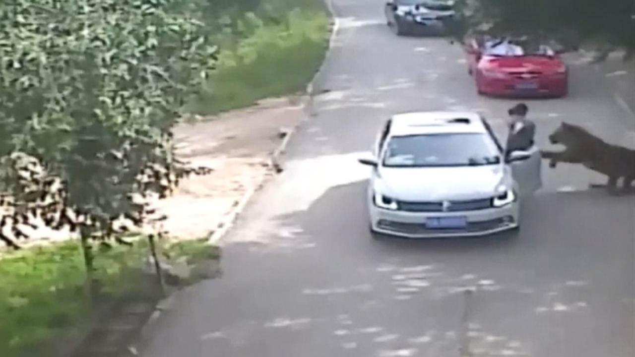 Woman Killed by Tiger After Exiting Her Vehicle at Beijing Animal Park