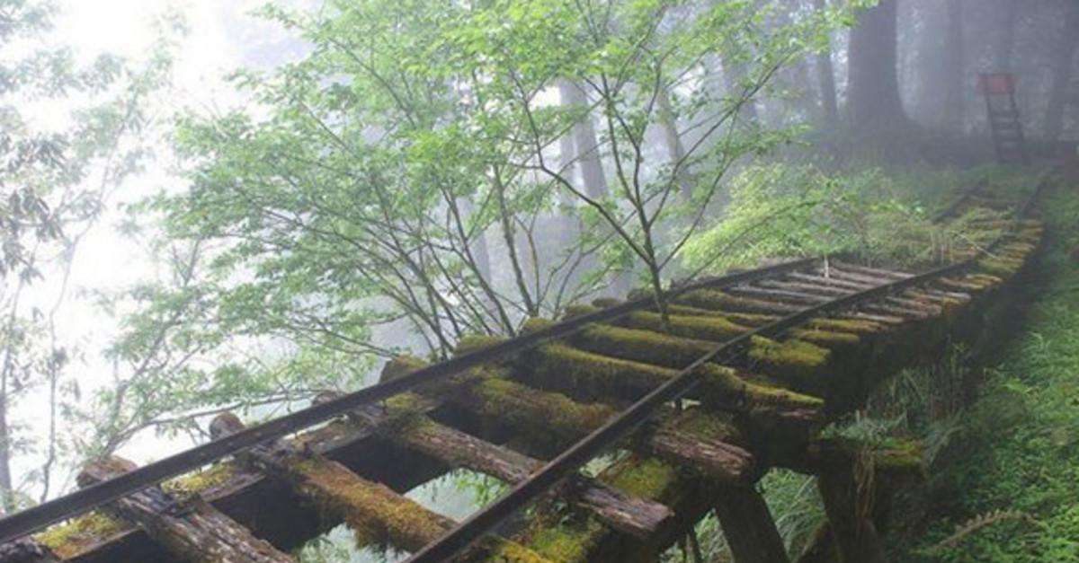 15 Pictures of Mother Nature Reclaiming Her Home