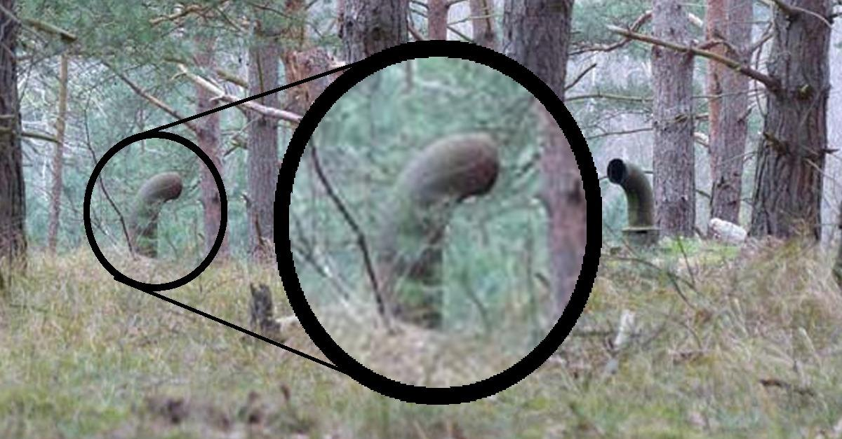 Man Finds Something Super Creepy In The Woods