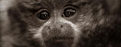 Titi monkey / Foto: iStockphoto