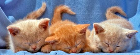 Kittens (Thinkstock)