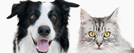 Cat and Dog (Corbis)