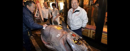 Kiyoshi Kimura (R), the owner of Sushi-Zanmai, a restaurant chain, poses next to a 592-pound bluefin tuna he purchased at Tokyo's Tsukiji fish market on January 5, 2012. (AFP)