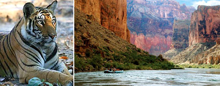 Tiger Safari, Grand Canyon rafters. (Courtesy of Terra Incognita Ecotours (L), and Arizona River Runners.)