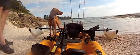 Dog gingerly exits kayak. (YouTube video)