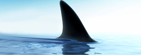 Shark (ThinkStock)