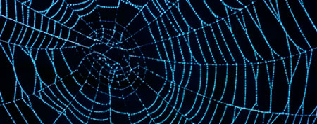 Spider web (ThinkStock)