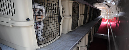 Adog waits in a kennel. (AP Photo/Dave Weaver)