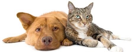 Dog and cat (Thinkstock)