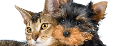 Pet owners face 18-month compo delay