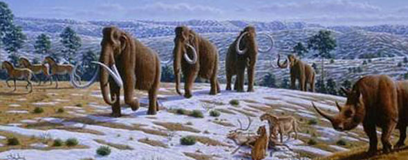 Woolly mammoths. (Photo By Mauricio Anton)