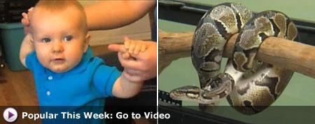 Python found wrapped around baby's leg. (NBC5 Dallas-Forth Worth)