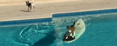 A video of a cat outsmarting a dog by jumping on a surfboard has gone viral (YouTube)