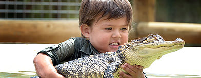 Fearless kid plays with alligators