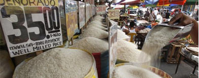 Can PH start exporting rice this year?