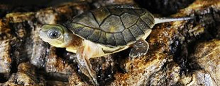 Family's missing turtle found 30 years later
