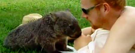 Man cuddles with a wombat