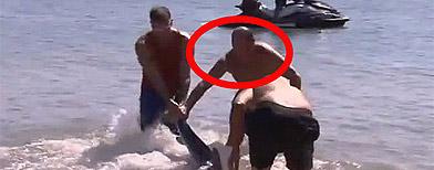 Sick leave shark wrestler sacked