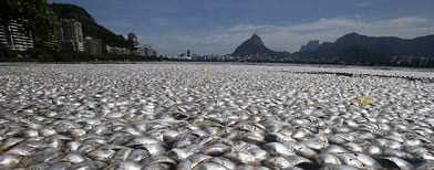 '65 tonnes of dead fish' in Olympic lake