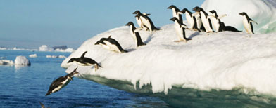 Why did penguins stop flying? Photo: Thinkstock