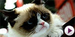 Grumpy Cat launches a book