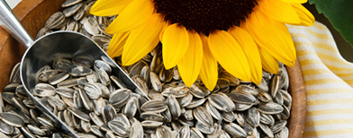 Sunflower seeds, Photo: Thinkstock