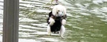 Stranded dog saved from island in lake