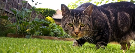 Just how deadly is your pet cat?