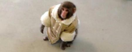 Nasty fight over IKEA monkey