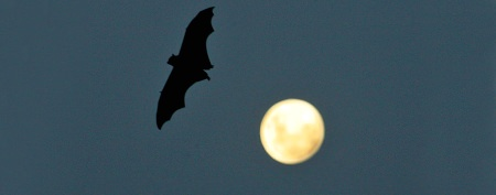 The dark truth about bats