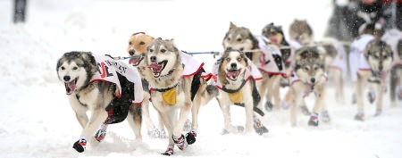 Critical problem for Iditarod dogsled race