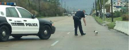 Cop shuts down highway to save dog