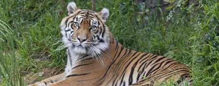 Rare Sumatran tiger cub born at S.F. zoo