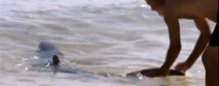 Men wrestle shark back into deep water