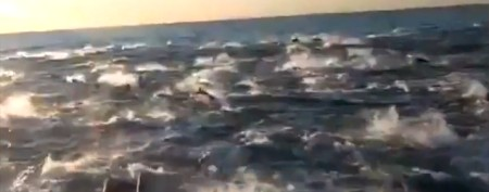 Superpod of dolphins astounds tourists