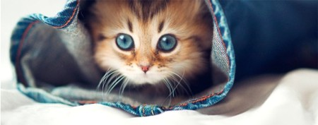 'The cutest little kitten in the world'