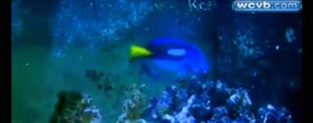 Exotic fish survives burglars' cruel attack