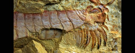 Amazing 520-million-year-old creature unearthed