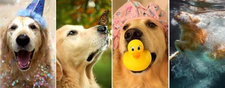 Photographer's dog stars in charming shots