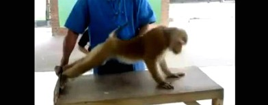 This monkey likes to workout