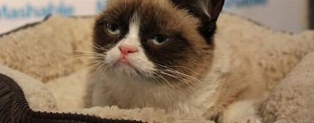 'Grumpy Cat' becomes instant celebrity