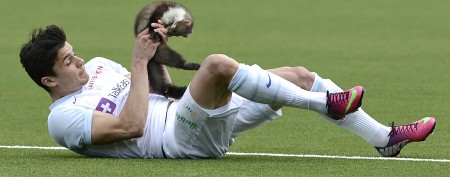 Unruly critter attacks players on soccer field