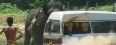 Caught on cam: An elephant crushes a van