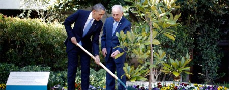 Tree Obama planted in Israel may be dug up