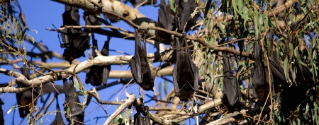 Bat virus kills 8-year-old boy on vacation